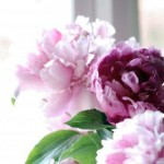 flowers, fresh flowers, peonies, pink peonies, fresh cut flowers, farmers market flowers, portland farmers market