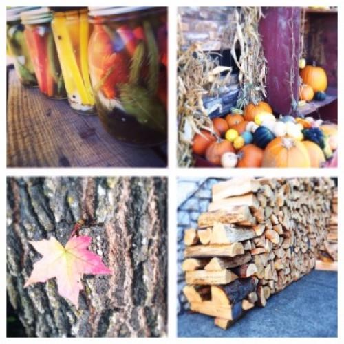 fall collage haute health