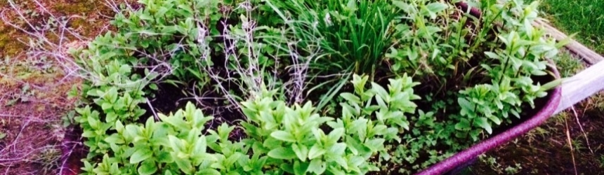 Gardening Your Hidden Potential
