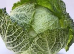 Vegan Cabbage Rolls